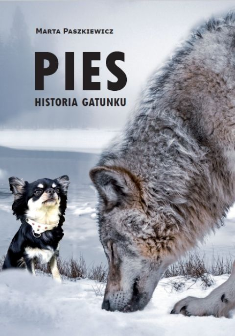 Pies. Historia gatunku